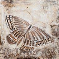 Obraz Brown Butterfly